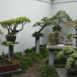 Пансионат для деревьев «бонсай»